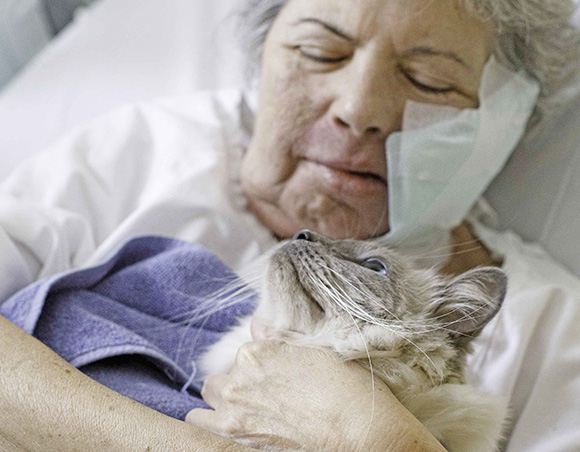 Palliative patient holding ragdoll cat Merlin